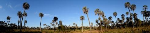 El Palmar's palms